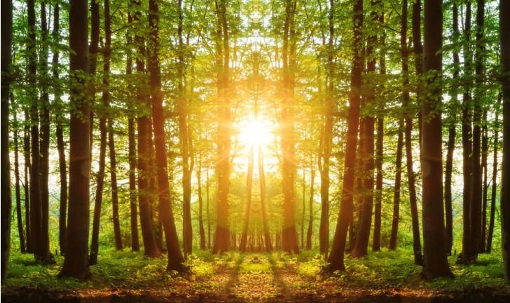 Apple compra 36 mil hectares de florestas para preservar meio ambiente