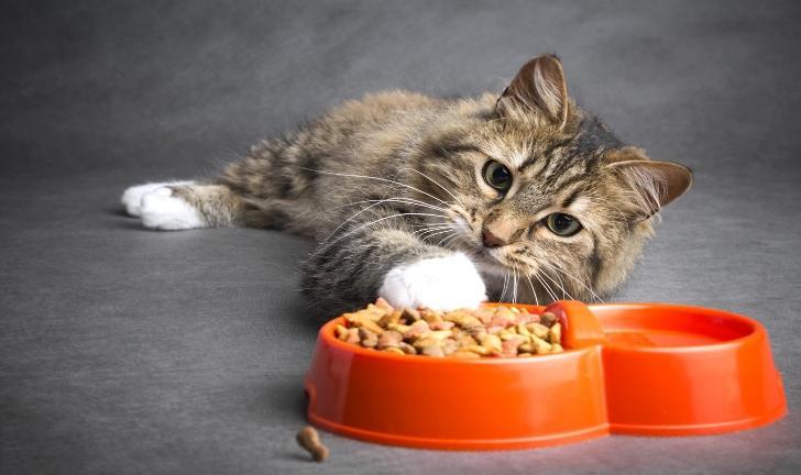 As 5 Melhores Rações para Gatos Castrados em 2018