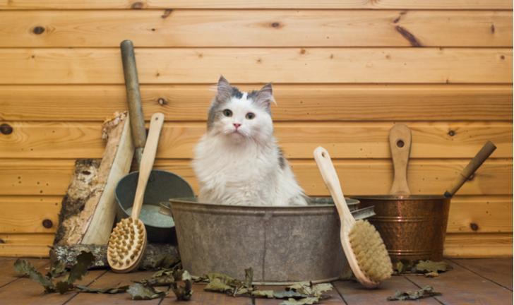 Conheça 8 Produtos Essenciais para a Higiene do Gato
