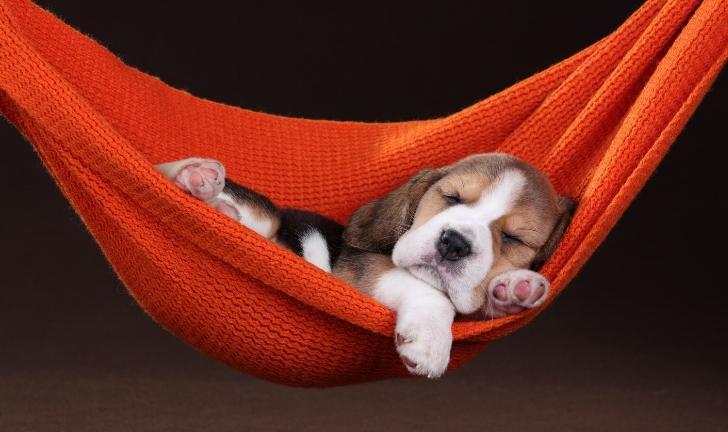 Enxoval para cachorro: confira os melhores itens para o seu pet!
