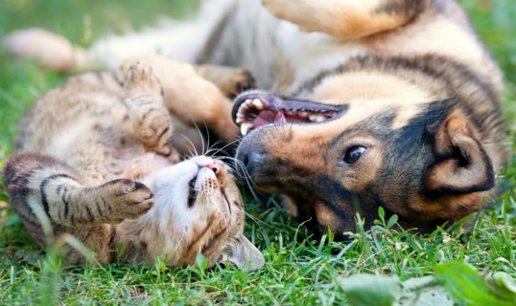 Os melhores produtos para seu pet: tudo para cães e gatos!