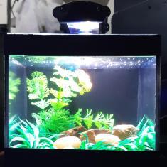 Imagem de Aquario Beteira Completa Com Luminaria Led  Aquaterrario