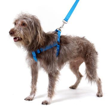 Peitoral para Cachorros Azul G