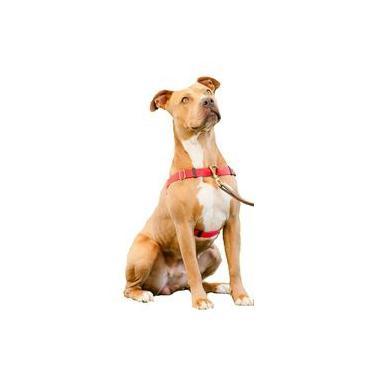 Coleira Peitoral Modelo Easy Para Cães